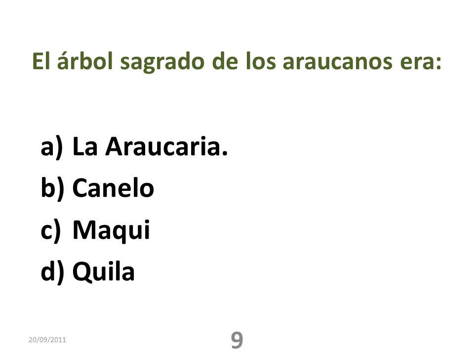 El árbol sagrado de los araucanos era: