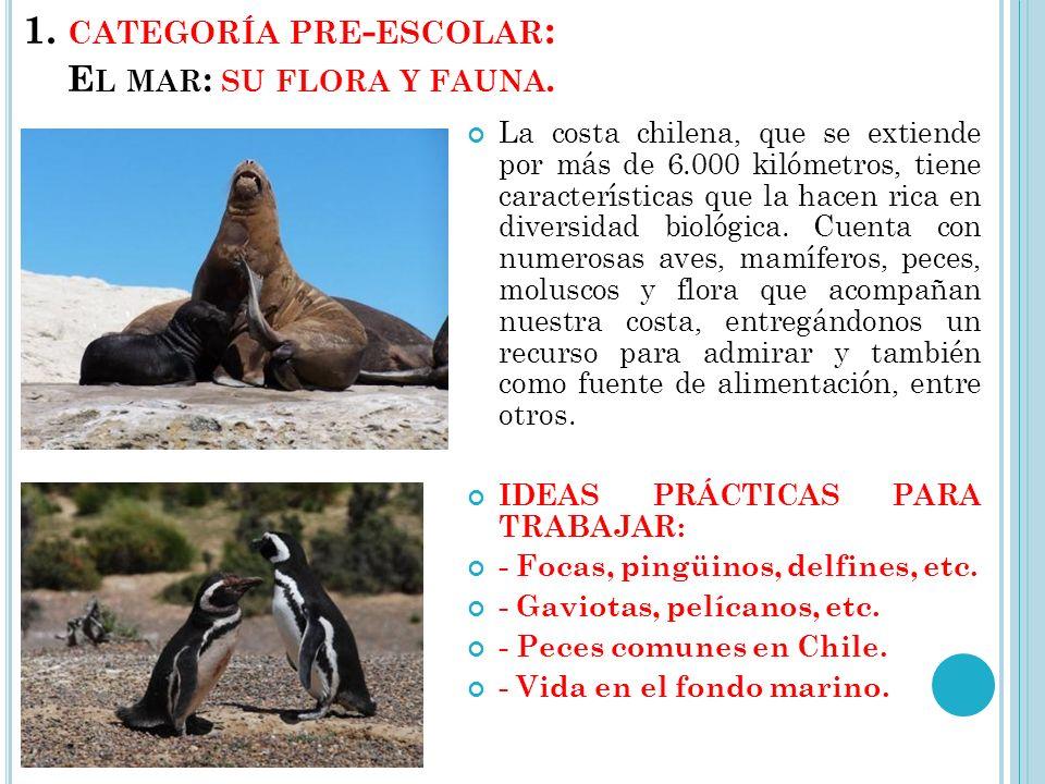 1. categoría pre-escolar: El mar: su flora y fauna.