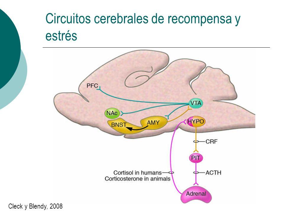 Circuitos cerebrales de recompensa y estrés