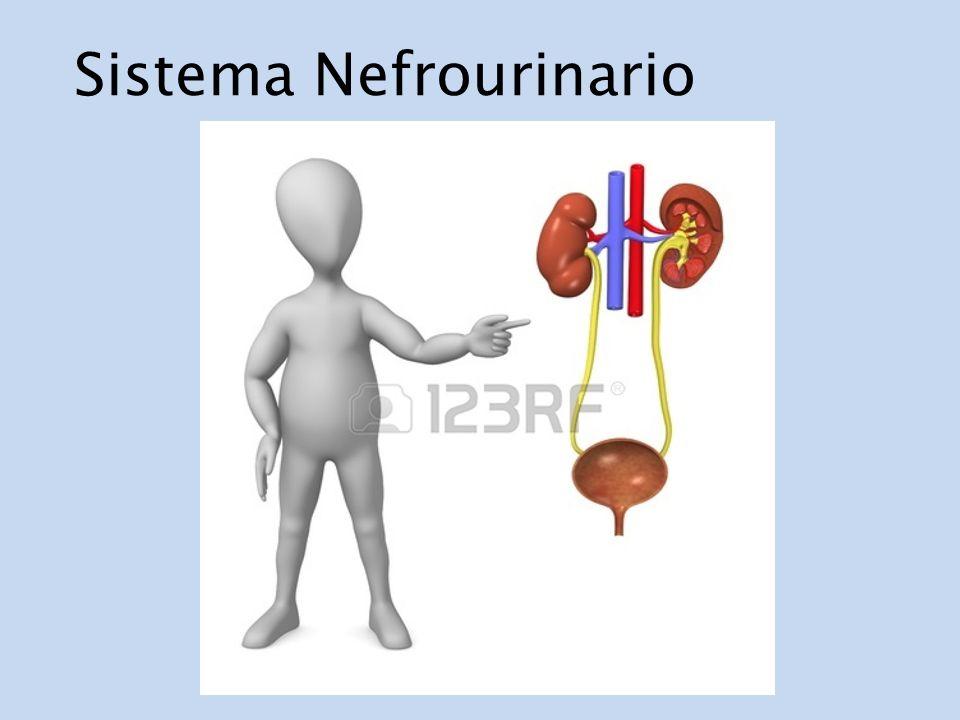 Sistema Nefrourinario