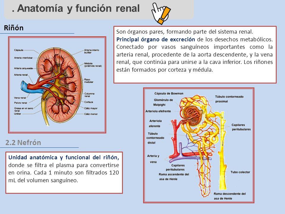. Anatomía y función renal