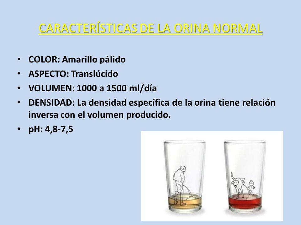 CARACTERÍSTICAS DE LA ORINA NORMAL
