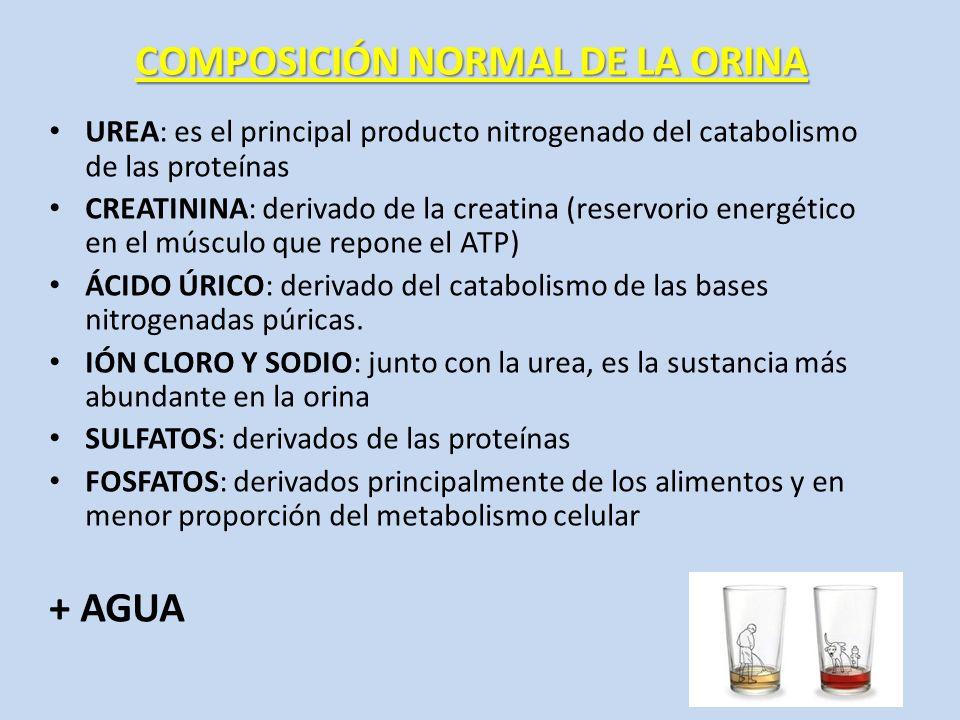 COMPOSICIÓN NORMAL DE LA ORINA