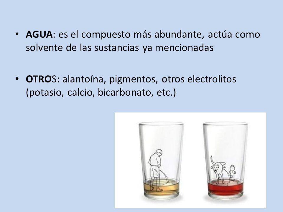 AGUA: es el compuesto más abundante, actúa como solvente de las sustancias ya mencionadas