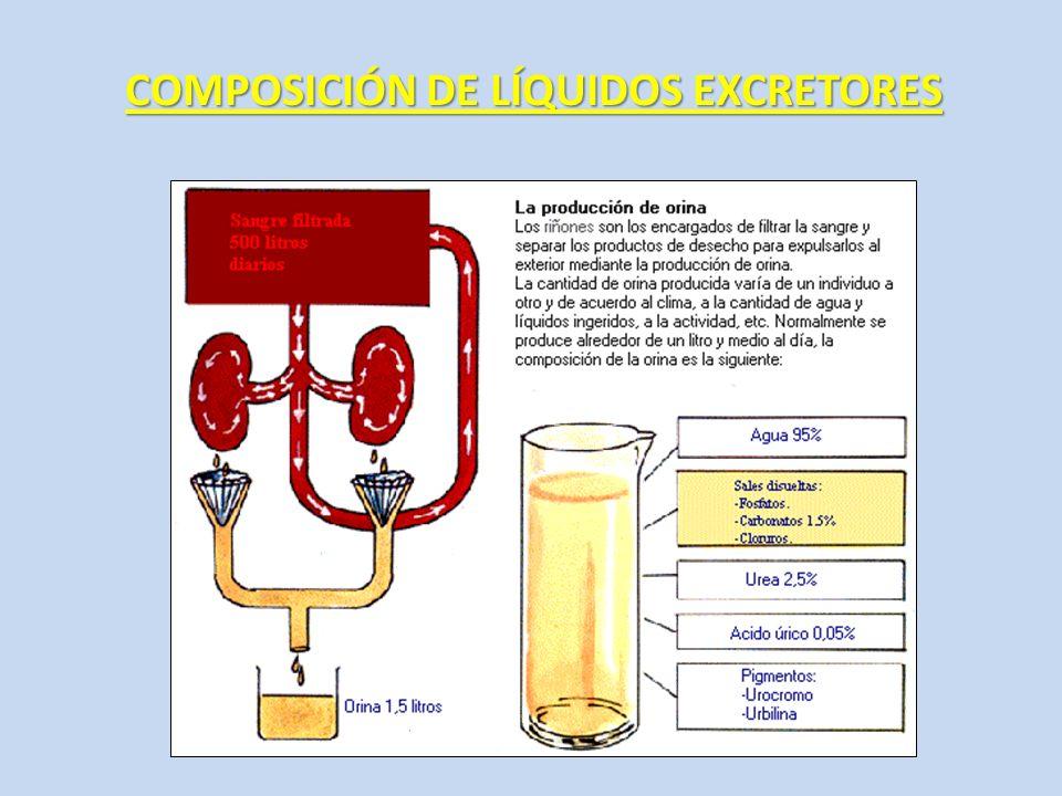 COMPOSICIÓN DE LÍQUIDOS EXCRETORES
