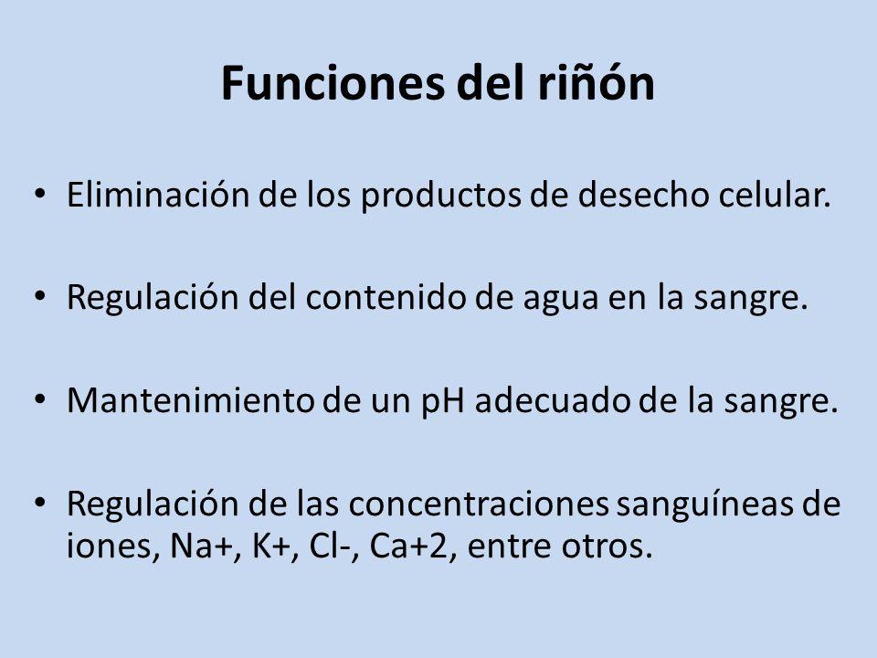 Funciones del riñón Eliminación de los productos de desecho celular.