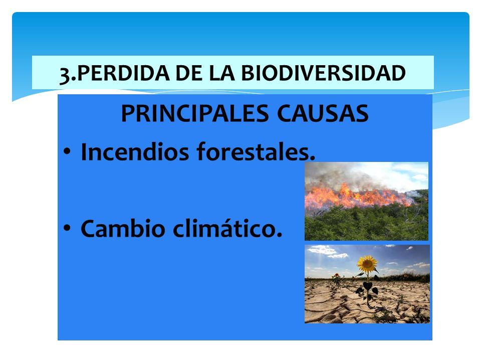 3.PERDIDA DE LA BIODIVERSIDAD