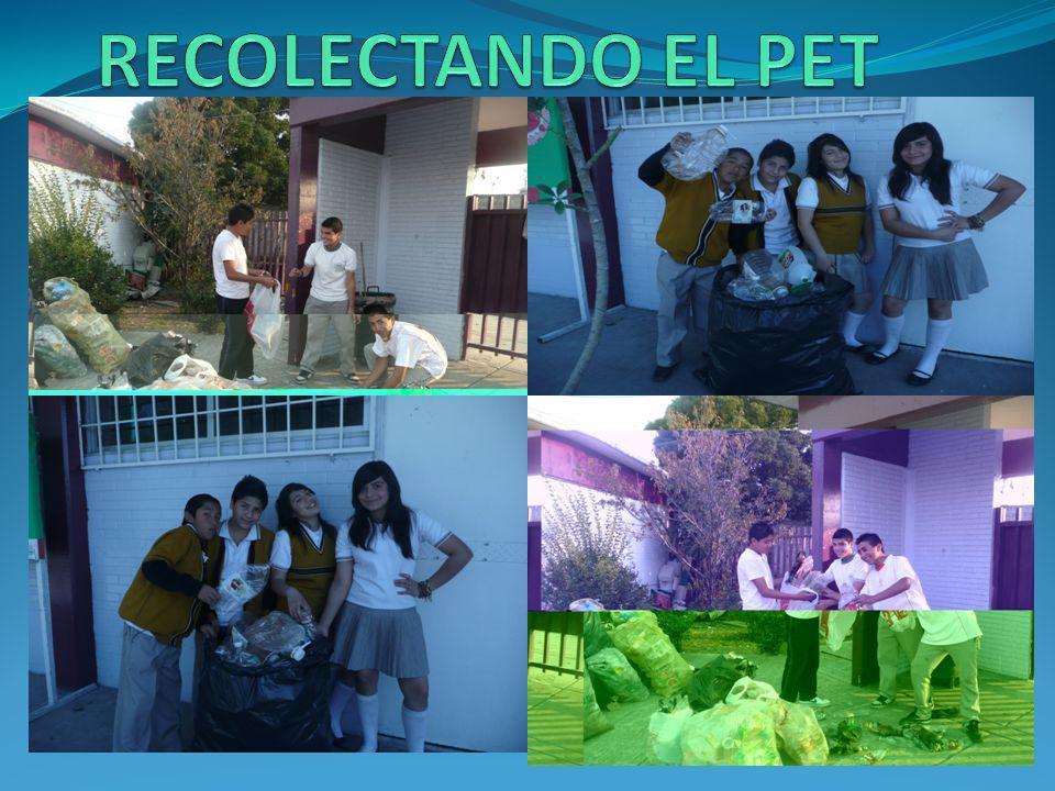 RECOLECTANDO EL PET