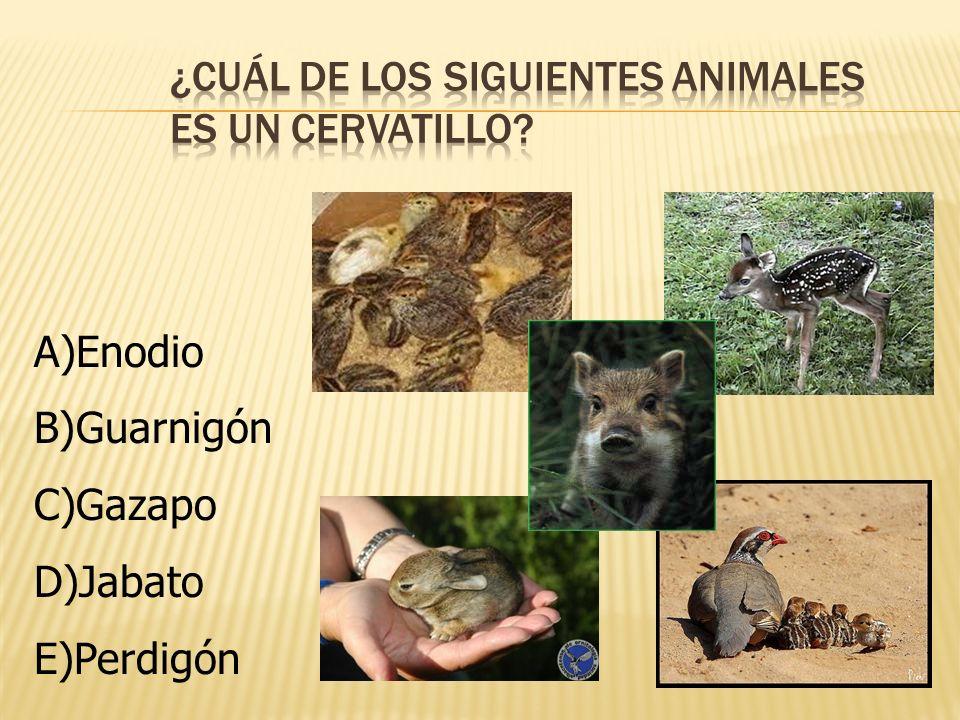 ¿Cuál de los siguientes animales es un cervatillo