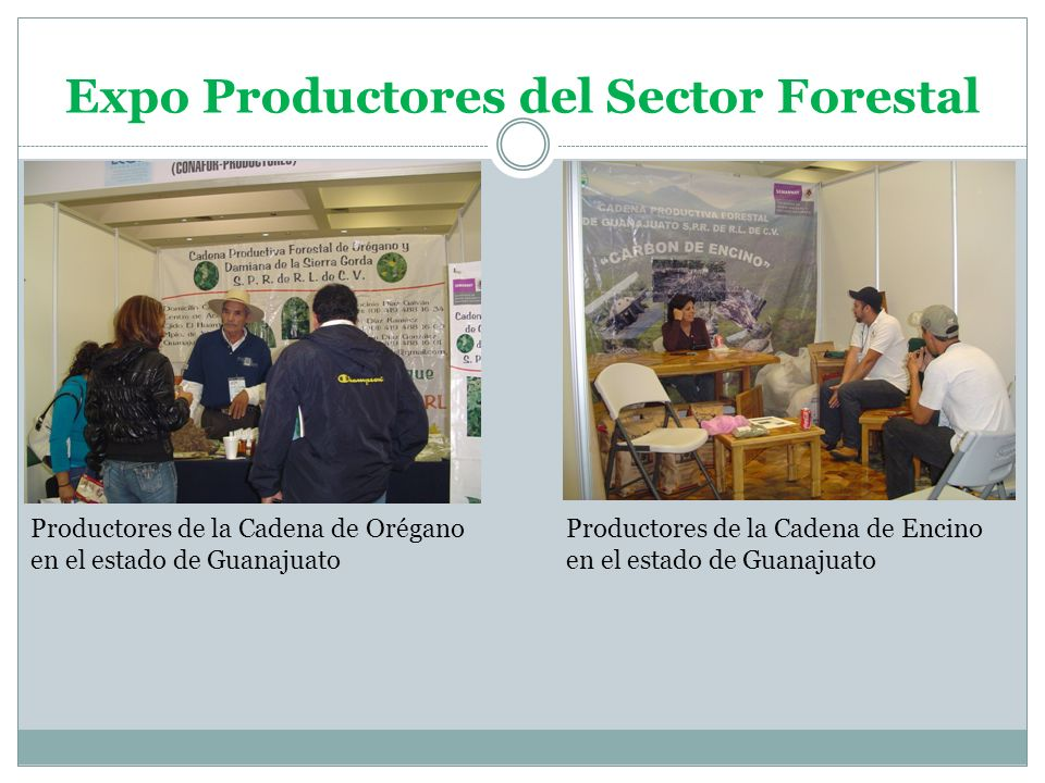 Expo Productores del Sector Forestal