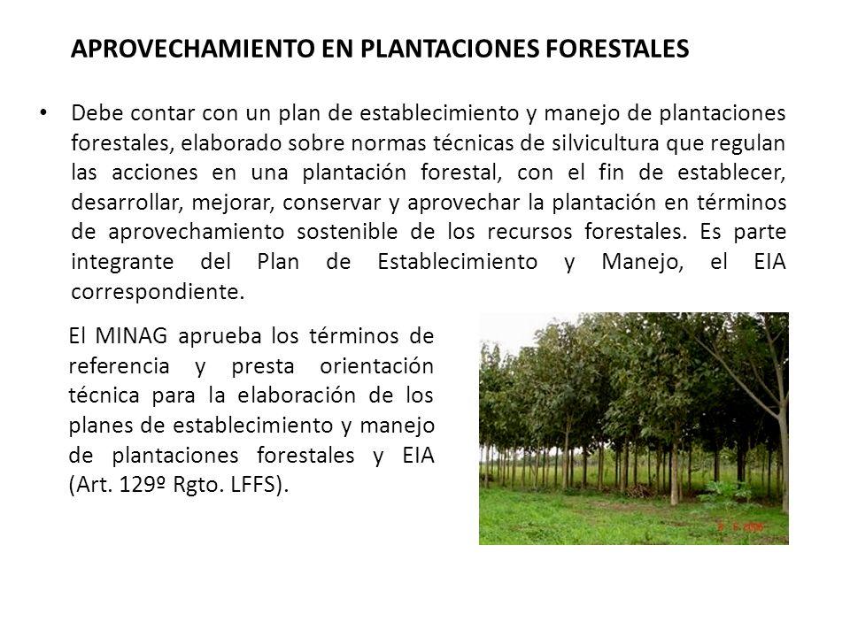APROVECHAMIENTO EN PLANTACIONES FORESTALES