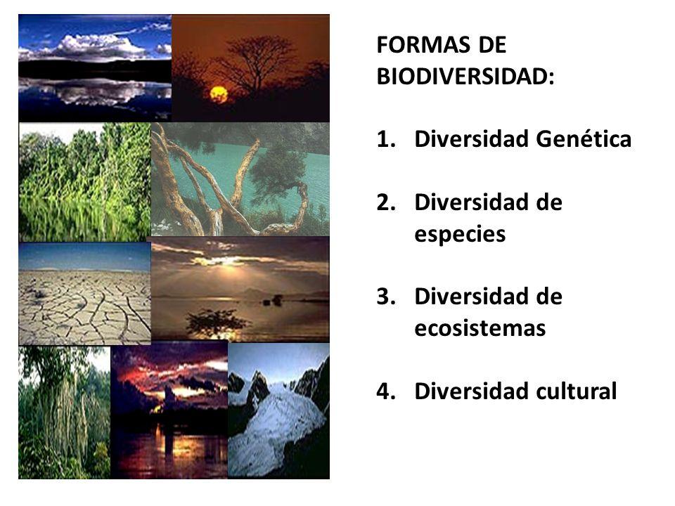 FORMAS DE BIODIVERSIDAD: