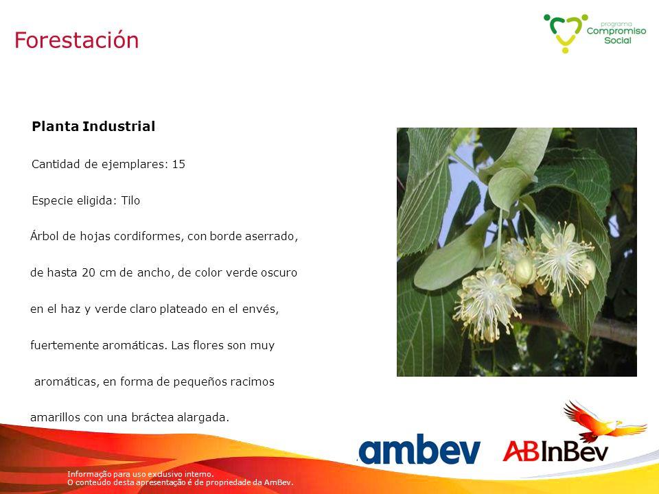 Forestación Planta Industrial Cantidad de ejemplares: 15