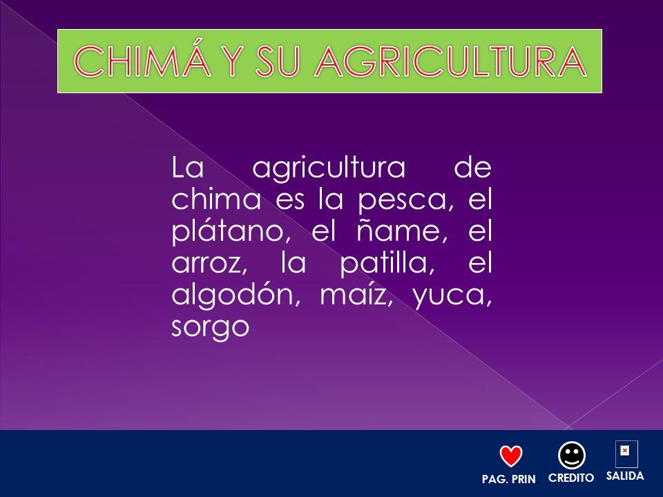 CHIMÁ Y SU AGRICULTURA La agricultura de chima es la pesca, el plátano, el ñame, el arroz, la patilla, el algodón, maíz, yuca, sorgo.