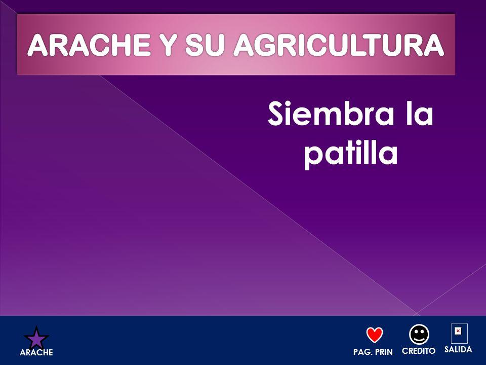 ARACHE Y SU AGRICULTURA