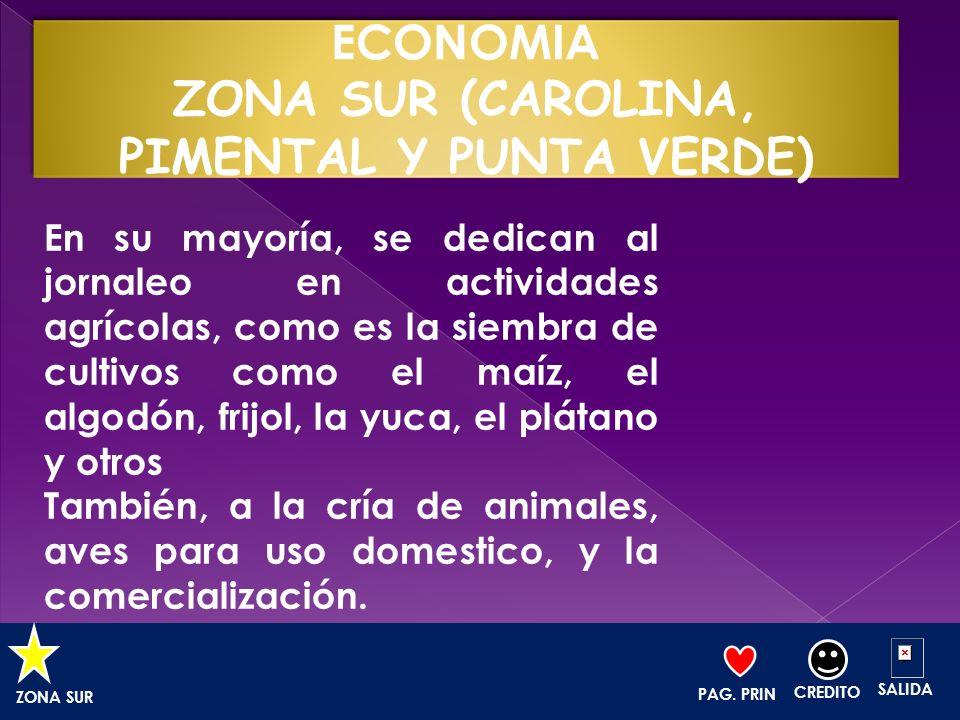 ECONOMIA ZONA SUR (CAROLINA, PIMENTAL Y PUNTA VERDE)