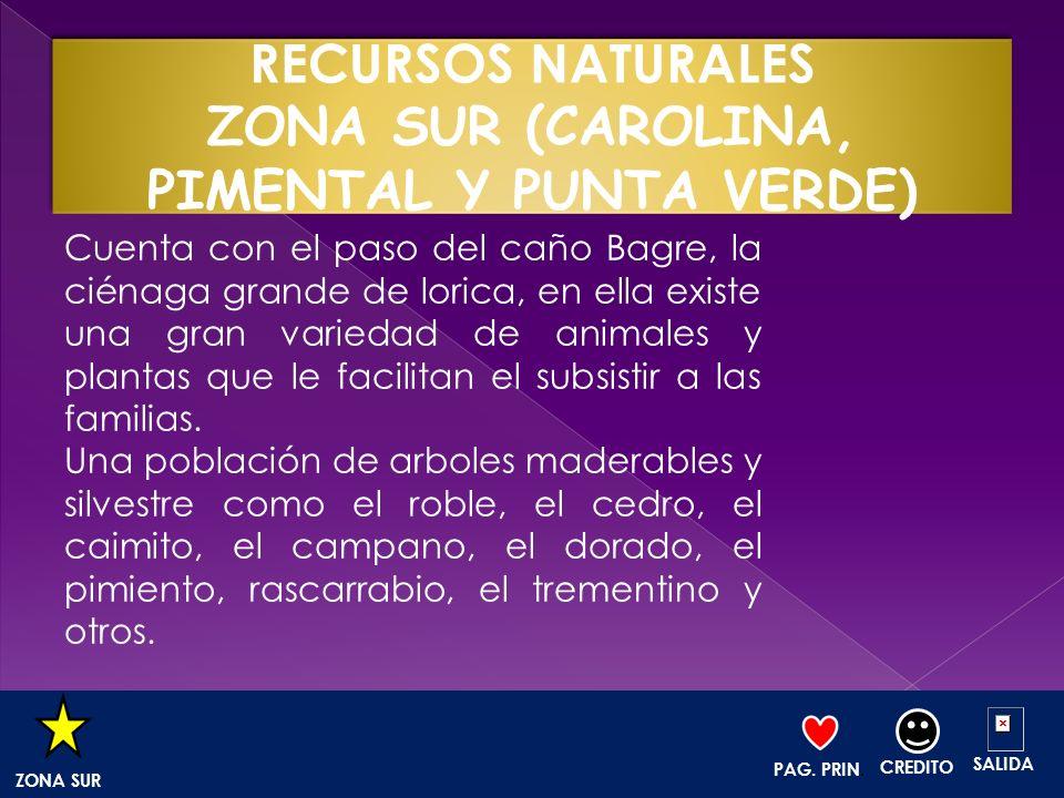 RECURSOS NATURALES ZONA SUR (CAROLINA, PIMENTAL Y PUNTA VERDE)