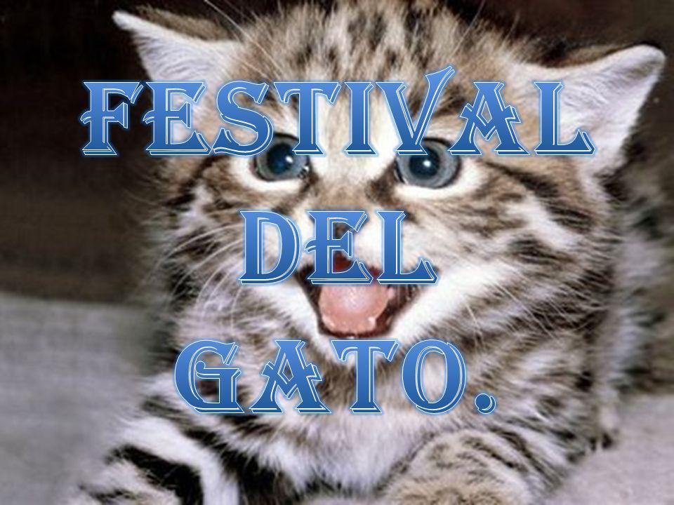 Festival del gato.