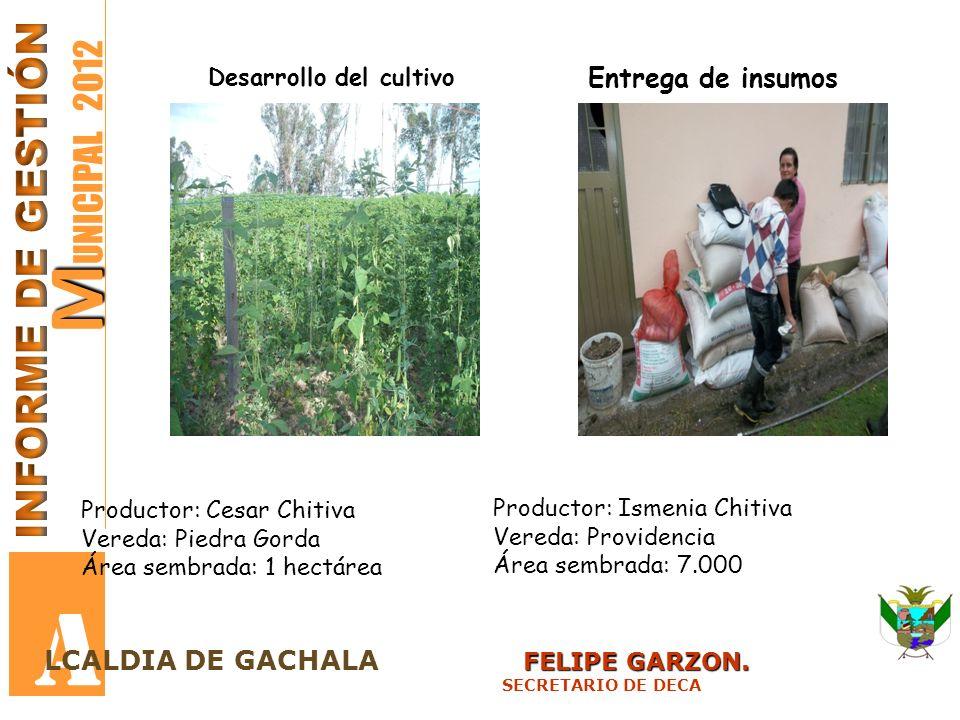 A MUNICIPAL 2012 INFORME DE GESTIÓN Entrega de insumos