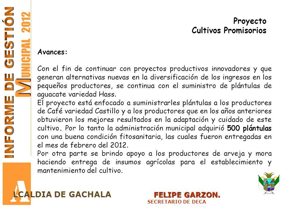 A MUNICIPAL 2012 INFORME DE GESTIÓN Proyecto Cultivos Promisorios