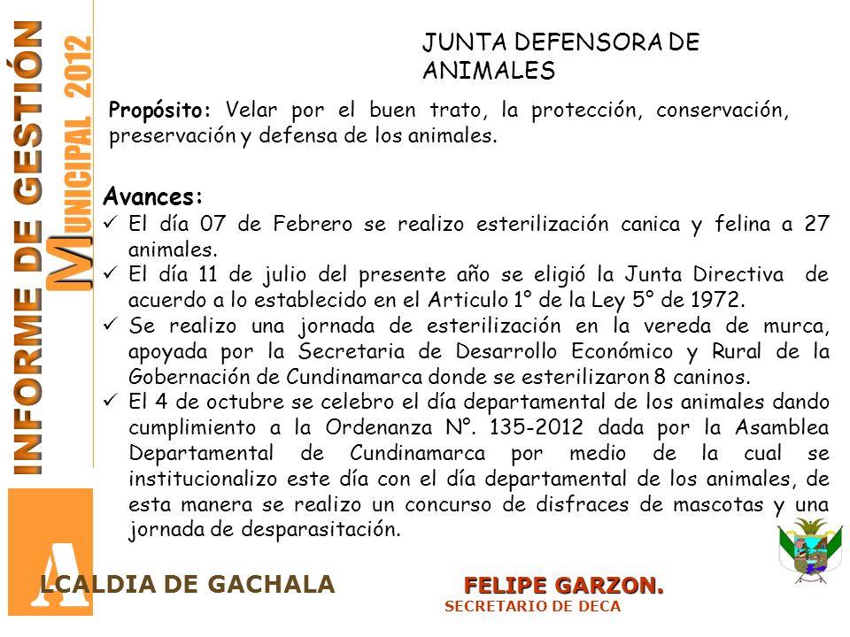 A MUNICIPAL 2012 INFORME DE GESTIÓN JUNTA DEFENSORA DE ANIMALES