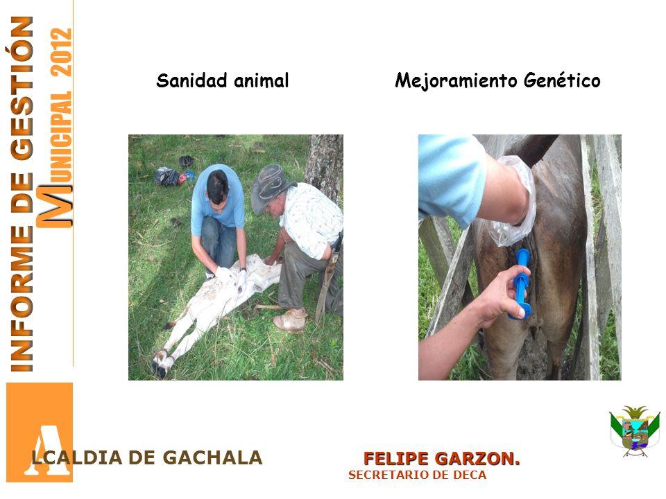 A MUNICIPAL 2012 INFORME DE GESTIÓN Sanidad animal