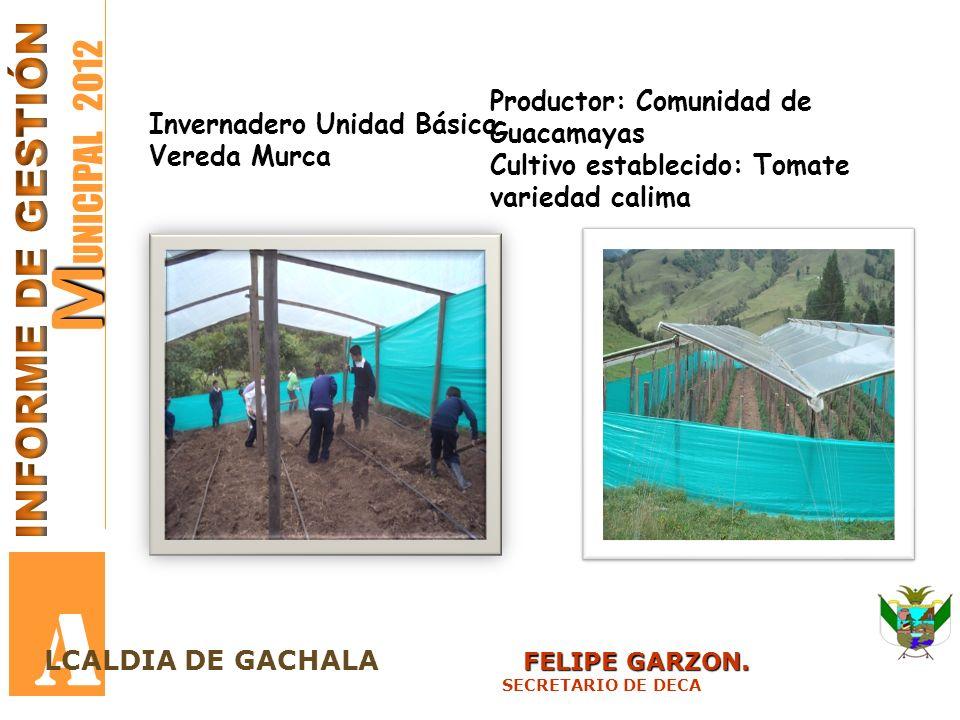 A MUNICIPAL 2012 INFORME DE GESTIÓN Productor: Comunidad de Guacamayas