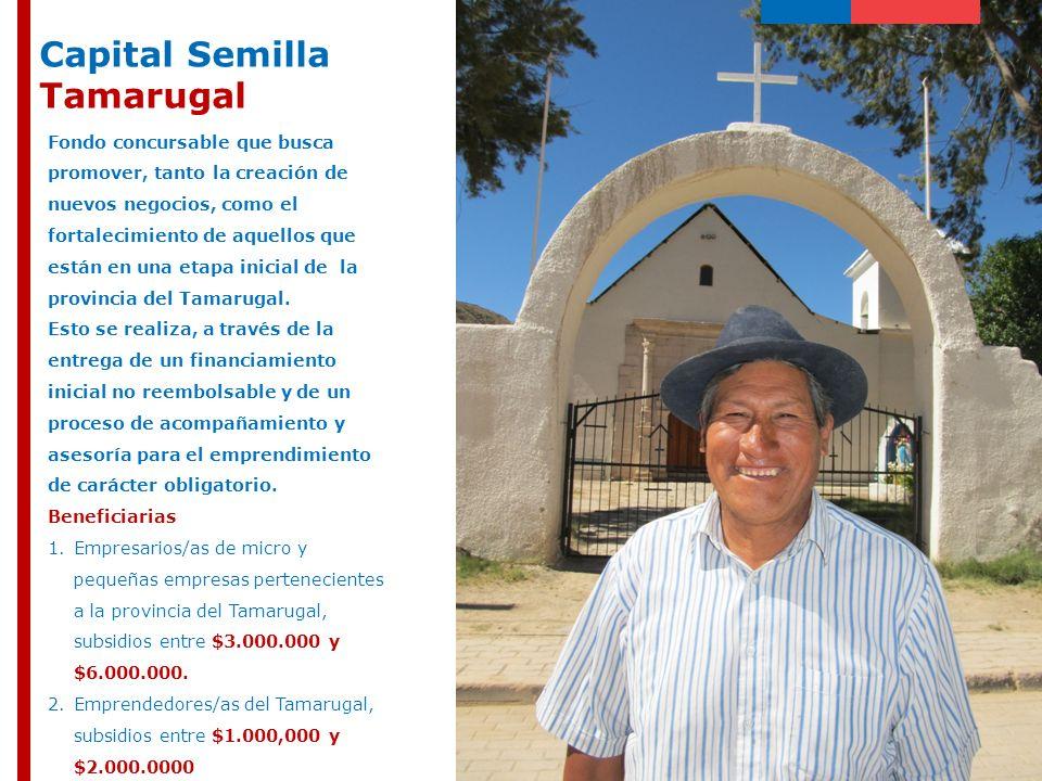 Capital Semilla Tamarugal