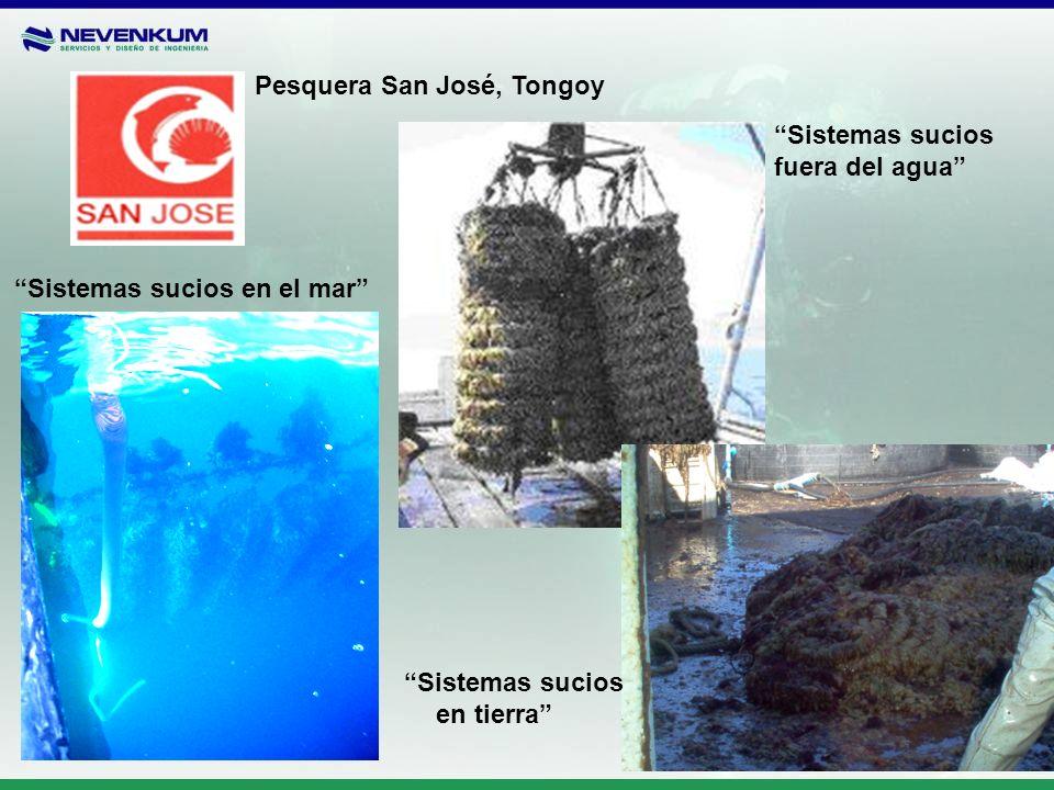 Pesquera San José, Tongoy