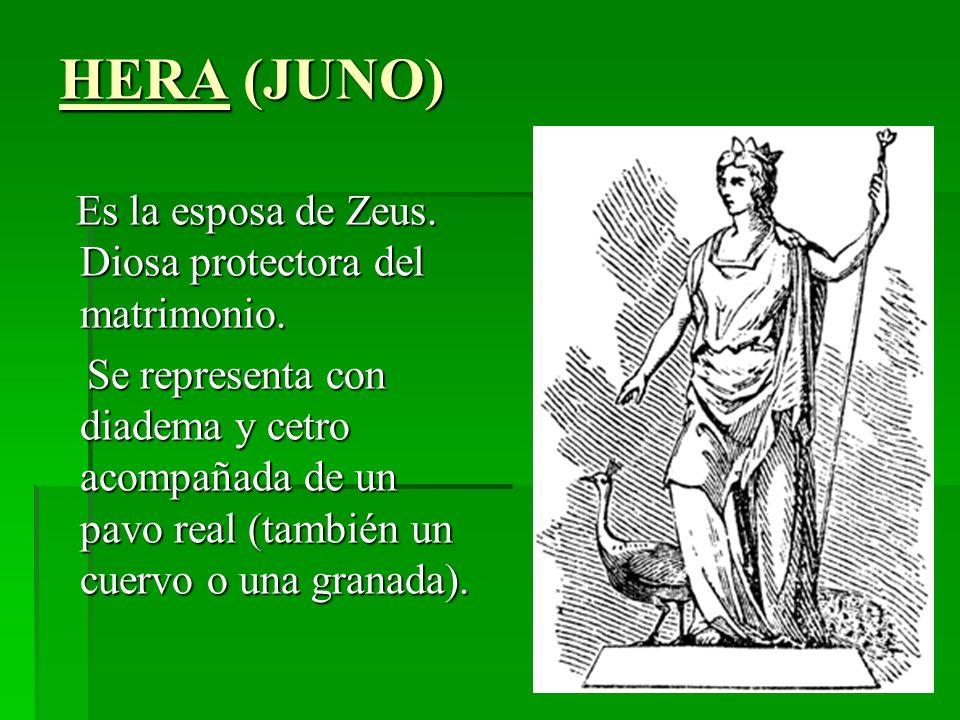 HERA (JUNO) Es la esposa de Zeus. Diosa protectora del matrimonio.