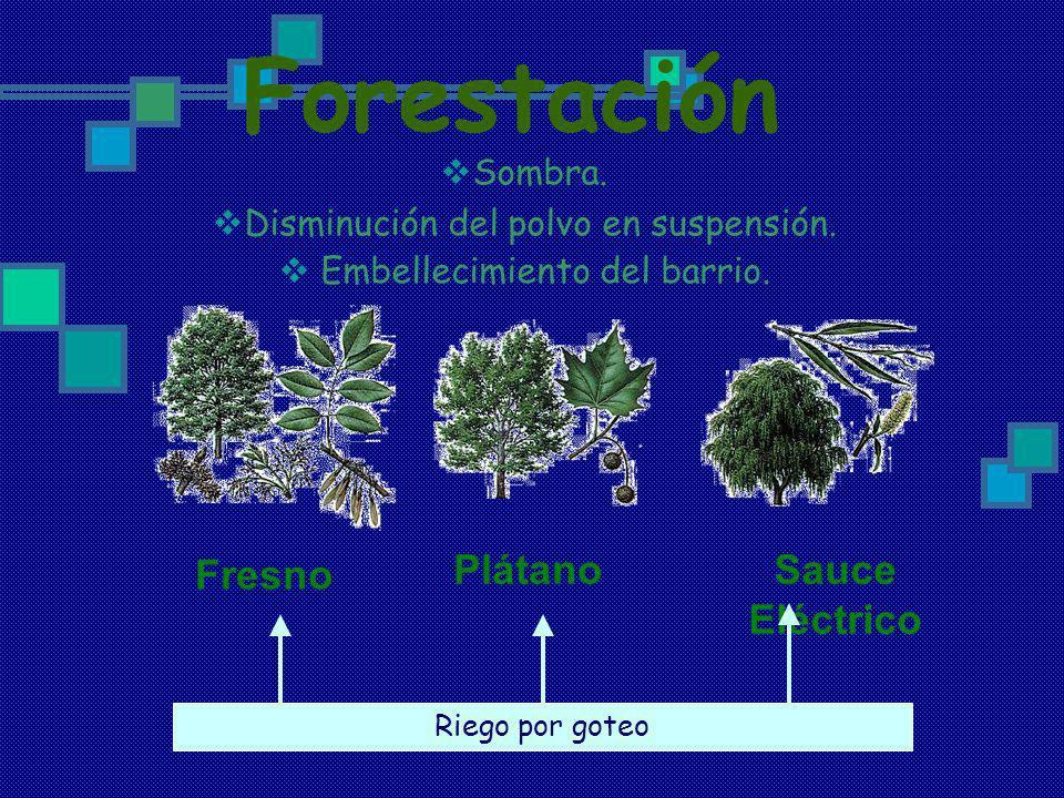 Forestación Fresno Plátano Sauce Eléctrico Sombra.