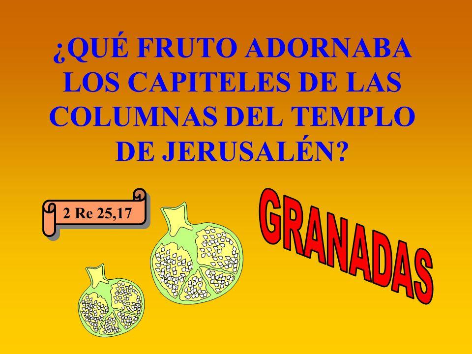 ¿QUÉ FRUTO ADORNABA LOS CAPITELES DE LAS COLUMNAS DEL TEMPLO DE JERUSALÉN