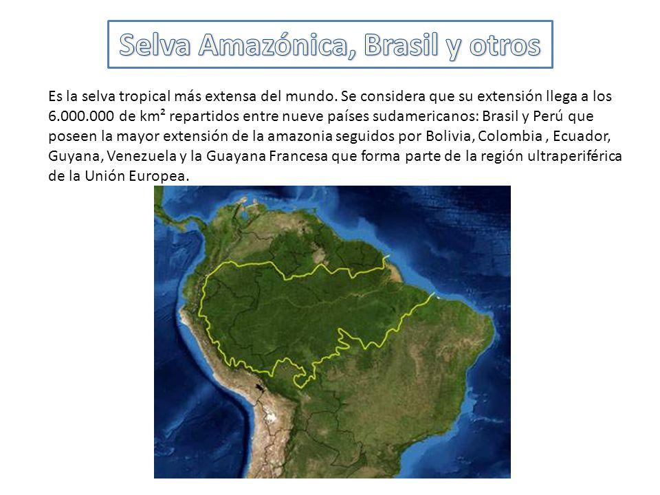 Selva Amazónica, Brasil y otros