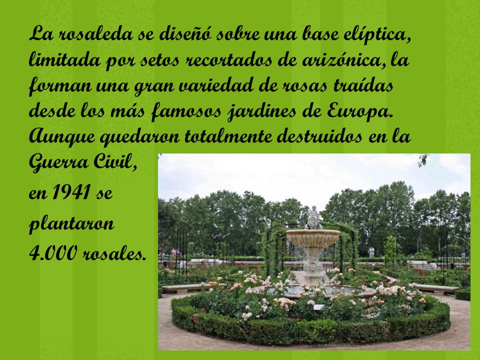 La rosaleda se diseñó sobre una base elíptica, limitada por setos recortados de arizónica, la forman una gran variedad de rosas traídas desde los más famosos jardines de Europa.