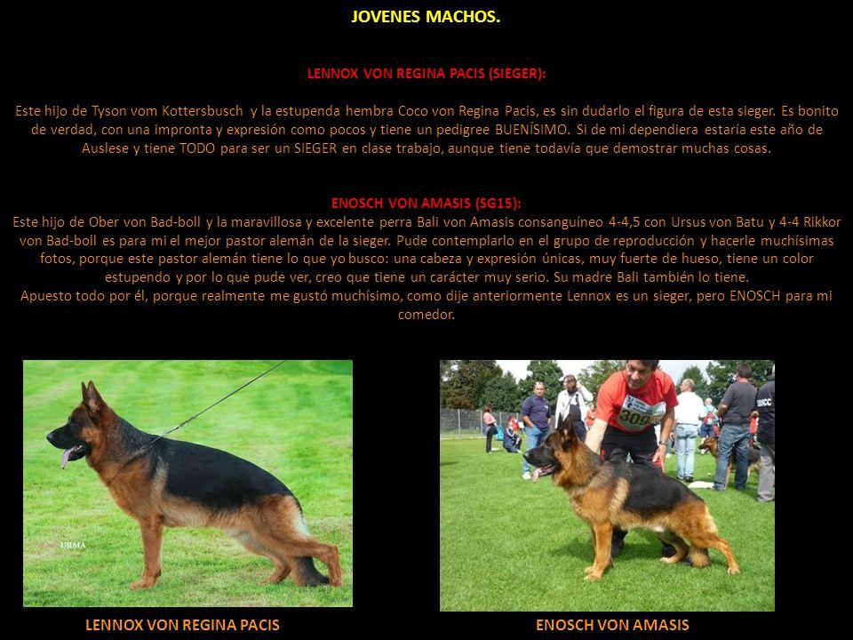 LENNOX VON REGINA PACIS (SIEGER):