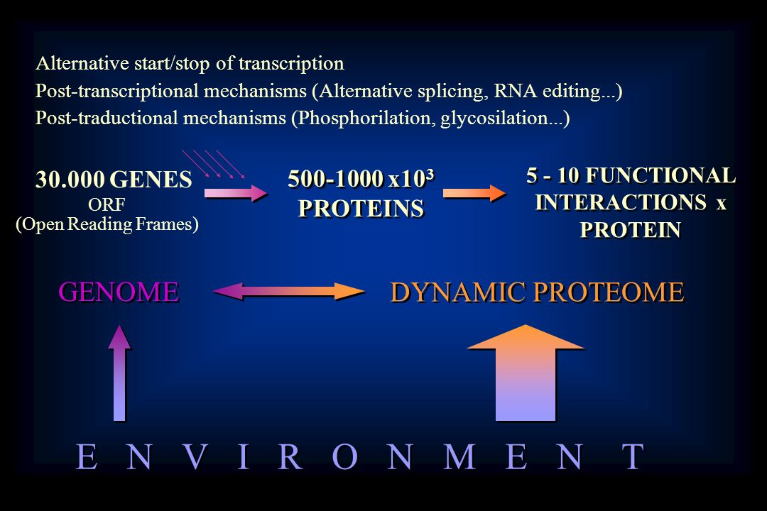 FUNCTIONAL INTERACTIONS x PROTEIN
