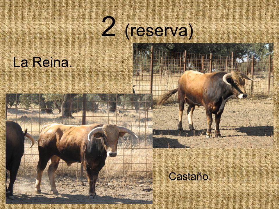 2 (reserva) La Reina. Castaño.