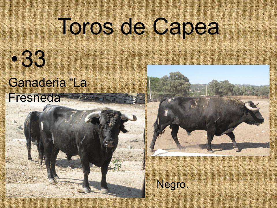 Toros de Capea 33 Ganaderia La Fresneda Negro.