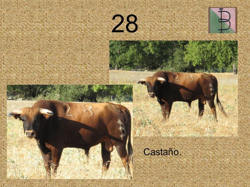 28 Castaño.