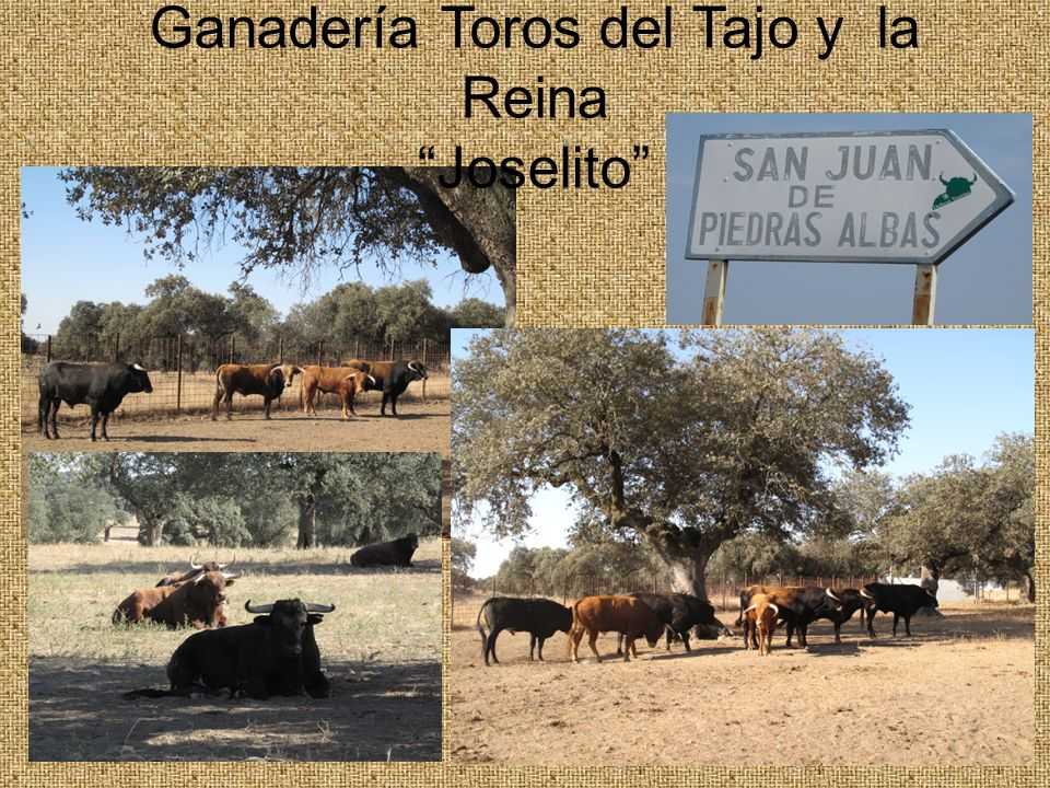 Ganadería Toros del Tajo y la Reina Joselito