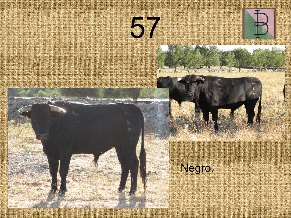 57 Negro.
