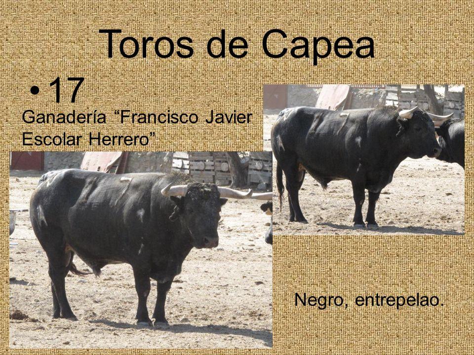 Toros de Capea 17 Ganadería Francisco Javier Escolar Herrero