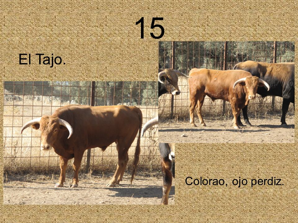 15 El Tajo. Colorao, ojo perdiz.