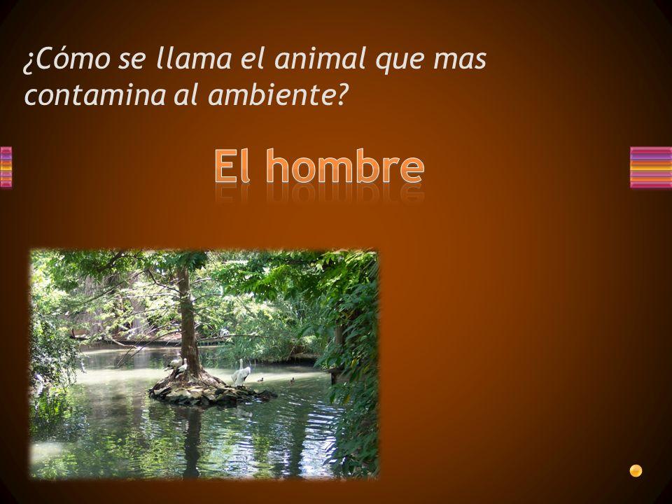 ¿Cómo se llama el animal que mas contamina al ambiente