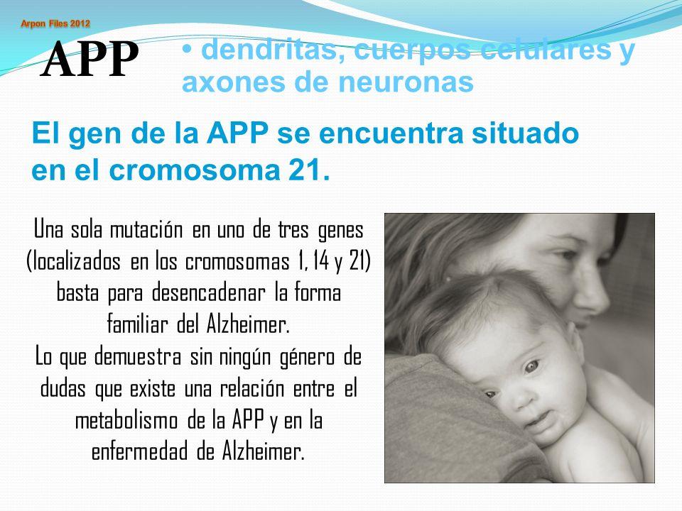 APP • dendritas, cuerpos celulares y axones de neuronas