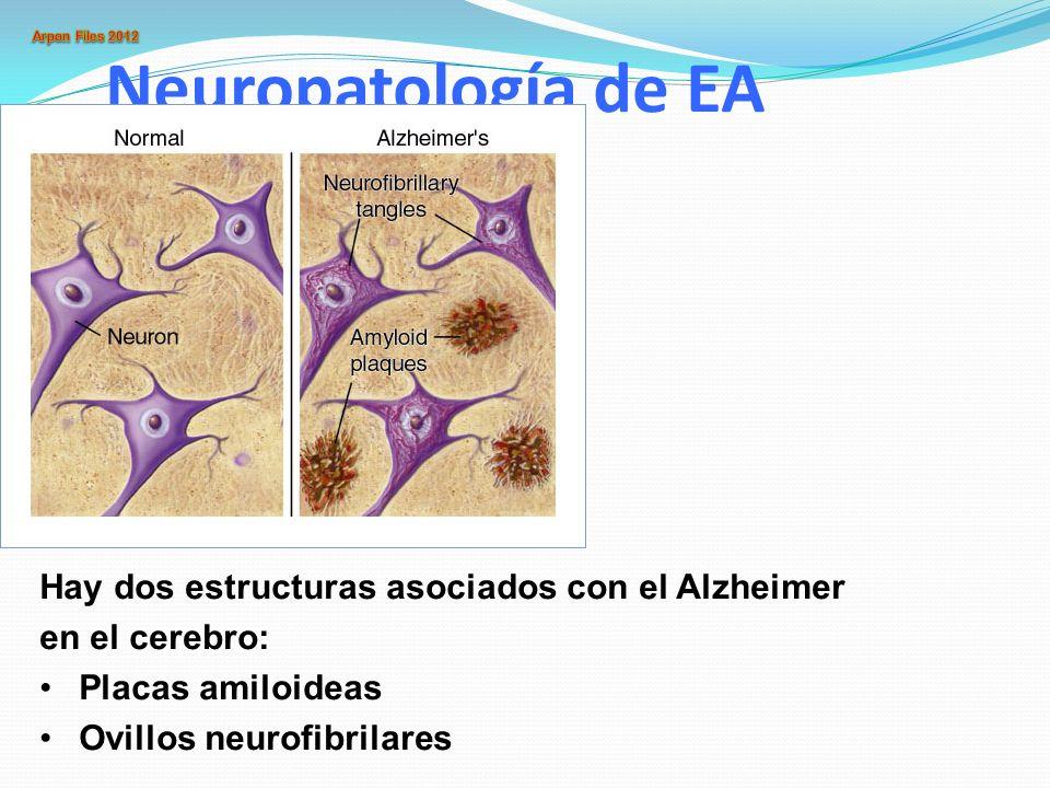 Neuropatología de EA Hay dos estructuras asociados con el Alzheimer