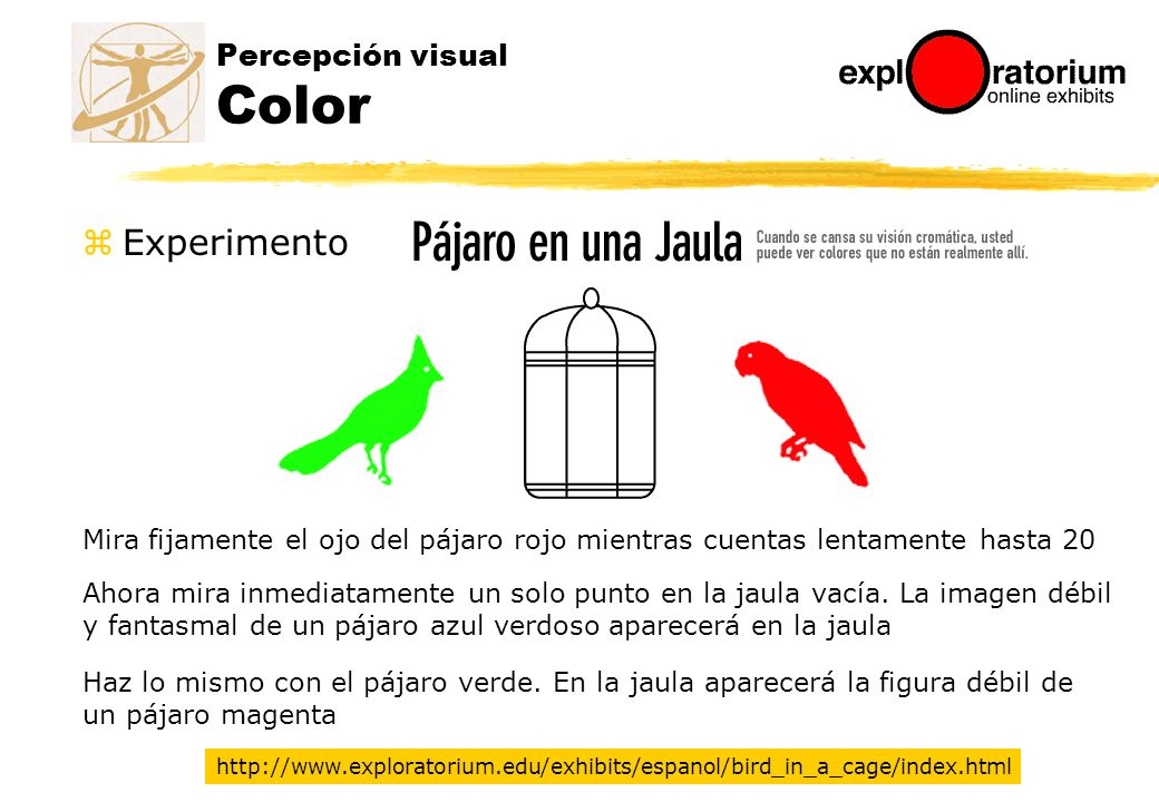 Percepción visual Color
