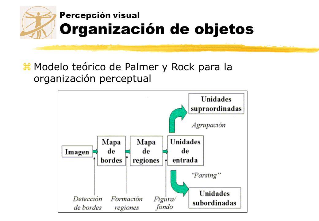 Percepción visual Organización de objetos