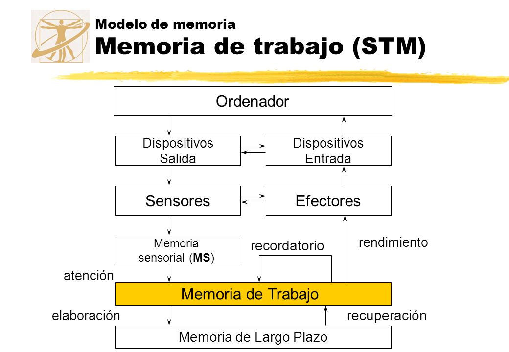 Modelo de memoria Memoria de trabajo (STM)