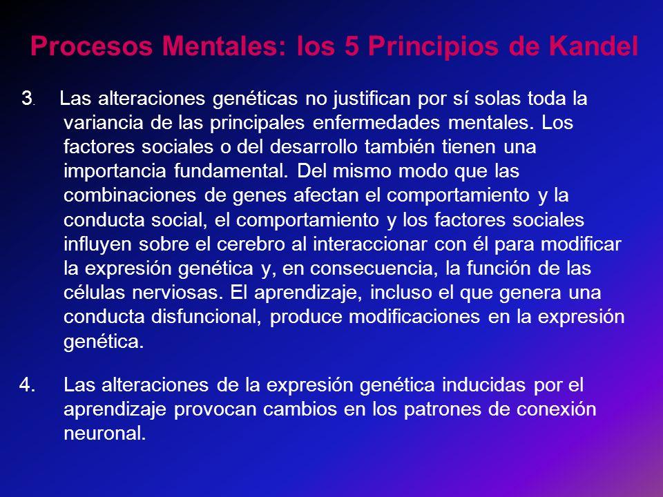 Procesos Mentales: los 5 Principios de Kandel